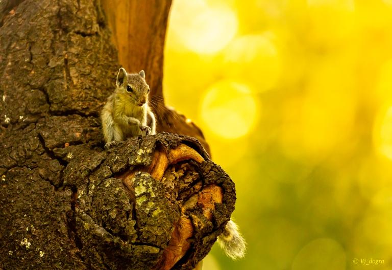Squirrel baby 1